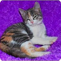 Adopt A Pet :: Mistletoe - Colmar, PA