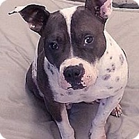 Adopt A Pet :: Merida URGENT - Sacramento, CA