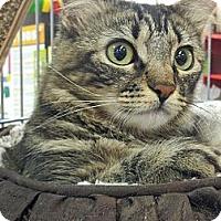 Adopt A Pet :: Tia - Chandler, AZ