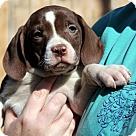Adopt A Pet :: Poppin