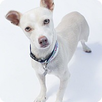 Adopt A Pet :: Laura - Santa Barbara, CA