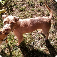 Adopt A Pet :: Mabel - Simi Valley, CA