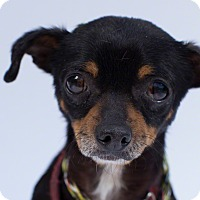 Adopt A Pet :: Shadow - Santa Barbara, CA