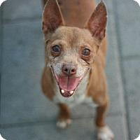Adopt A Pet :: Chofiro - Canoga Park, CA