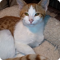 Adopt A Pet :: Brigot's Sweet Man - Yukon, OK