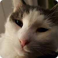 Adopt A Pet :: Padlock - Portland, ME