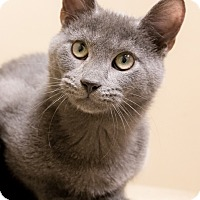 Adopt A Pet :: Smoke - Chicago, IL