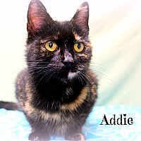Adopt A Pet :: Addie - Melbourne, KY
