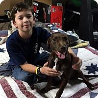 Adopt A Pet :: Hershey - Irvine, CA