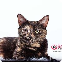 Adopt A Pet :: Diana - $10 - Cincinnati, OH
