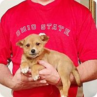 Adopt A Pet :: Tucker - South Euclid, OH