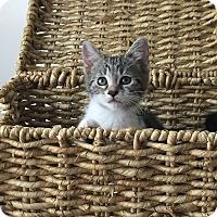 Adopt A Pet :: Sansa - Great Mills, MD