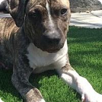 Adopt A Pet :: June - San Diego, CA
