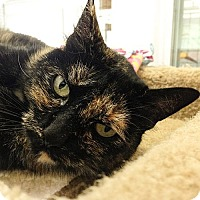 Adopt A Pet :: Priscilla - Port Angeles, WA
