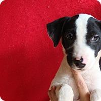 Adopt A Pet :: Buster - Oviedo, FL