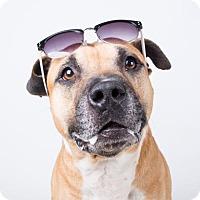 Adopt A Pet :: Zeus - Adrian, MI