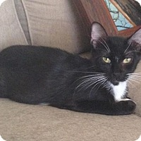 Adopt A Pet :: Tuxy - Tucson, AZ