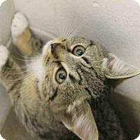 Adopt A Pet :: POE - Decatur, IL