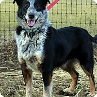 Adopt A Pet :: Sammy - Lacon, IL