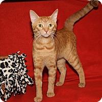 Adopt A Pet :: Romeo (Neutered) - Marietta, OH