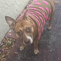 Adopt A Pet :: Aggy - Tampa, FL