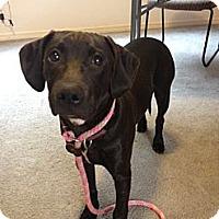 Adopt A Pet :: Brom - Wasilla, AK