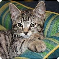 Adopt A Pet :: Relish (LE) - Little Falls, NJ