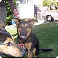 Adopt A Pet :: BONO and BILLY RAY - Malibu, CA