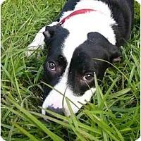 Adopt A Pet :: Kira - Mocksville, NC