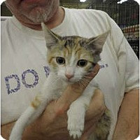 Adopt A Pet :: Sparkle - Warren, MI