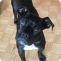 Adopt A Pet :: Yoda - Hamilton, ON