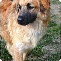 Adopt A Pet :: Logan - in Maine! - kennebunkport, ME