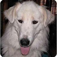Adopt A Pet :: JUSTICE - Gilbert, AZ