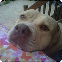 Adopt A Pet :: Bonnie - Dallas, PA