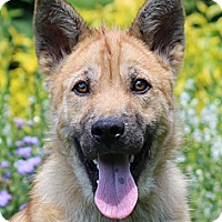 Adopt A Pet :: Vandy - Nashville, TN