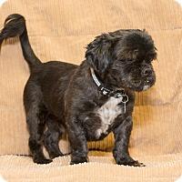 Adopt A Pet :: Ewok - Elmwood Park, NJ