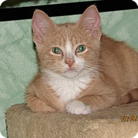 Adopt A Pet :: Maple - Southington, CT