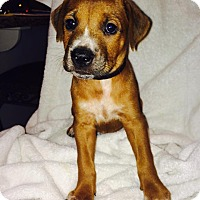 Adopt A Pet :: Mason - Huntsville, AL
