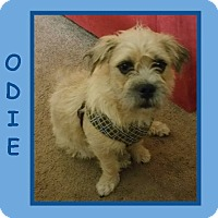 Adopt A Pet :: ODIE - Dallas, NC