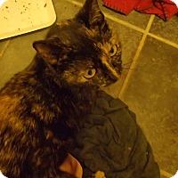 Adopt A Pet :: Shelly - Ponchatoula, LA