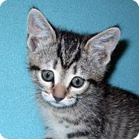 Adopt A Pet :: 16-c03-013 Riley - Fayetteville, TN
