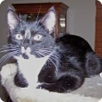 Adopt A Pet :: K-Princess2-Twix - Colorado Springs, CO