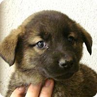 Adopt A Pet :: Martin - Erwin, TN