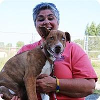 Adopt A Pet :: Bobbie Jo - Elyria, OH