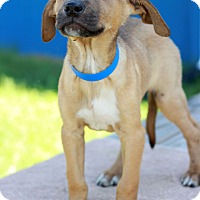 Adopt A Pet :: Skipper - Waldorf, MD