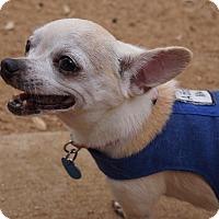 Adopt A Pet :: Tillie - AUSTIN, TX