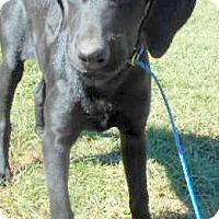 Adopt A Pet :: Rachael - Allentown, NJ
