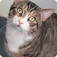 Adopt A Pet :: Wally - Manahawkin, NJ