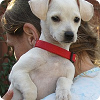 Adopt A Pet :: Patty - Sonoma, CA