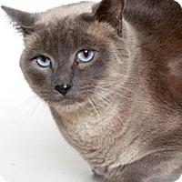 Adopt A Pet :: RASCAL - Gloucester, VA